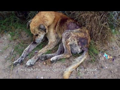 Street dog rescued in the worst state of neglect