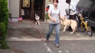 """ジョセフ参上! ようこそ Dog support """"pretty wan"""" のブログへ http://..."""