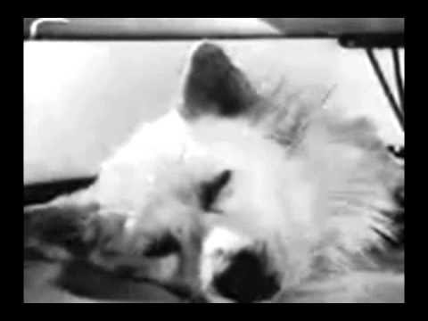 SEVERED DOG HEAD BROUGHT BACK TO LIFE - YouTube