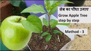 How to germinate apple seed Part 5 एप्पल/सेब को बिज से कैसे उगाए/बी पासुन सफरचंद उगवा