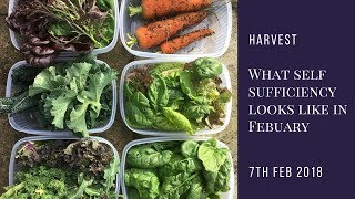 This is what self-sufficiency - in seasonal veg - looks like in February!
