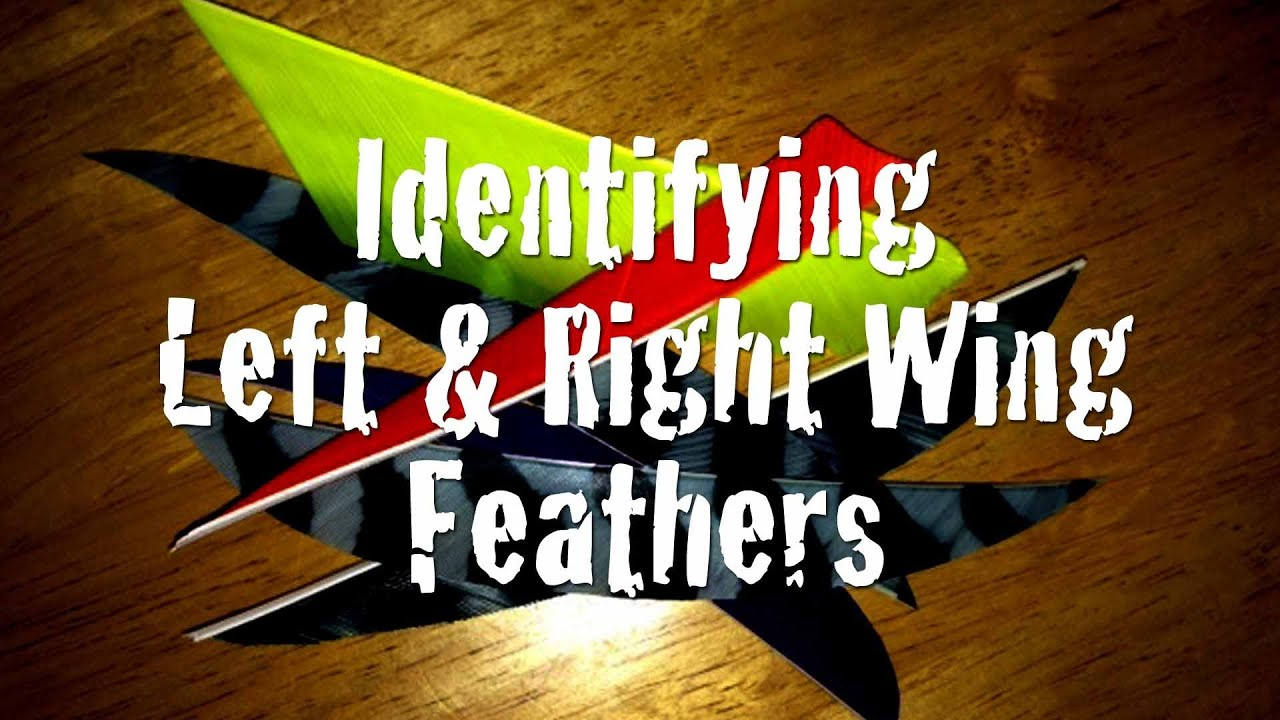 How To Identify Left And Right Wing Feathers Youtube