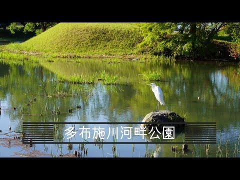 【vlog】多布施川河畔公園を空から:沼に近づかず、上空からサギを撮影したよ