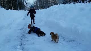 Играем на улице с нашим щенком породы Пекинес