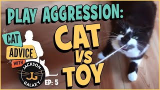 When play goes too far: Cat vs. Toy