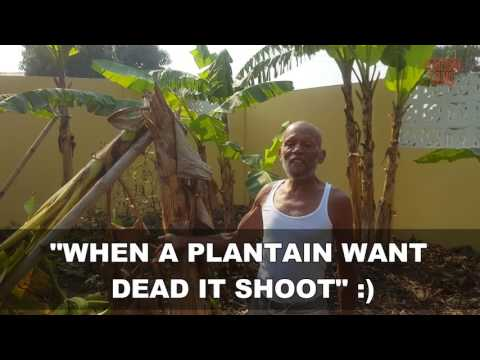 Father's Village: How to identify trees - Ghana, Africa