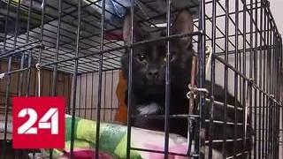 Пенсионерка хочет судиться с зоозащитниками из-за кота - Россия 24