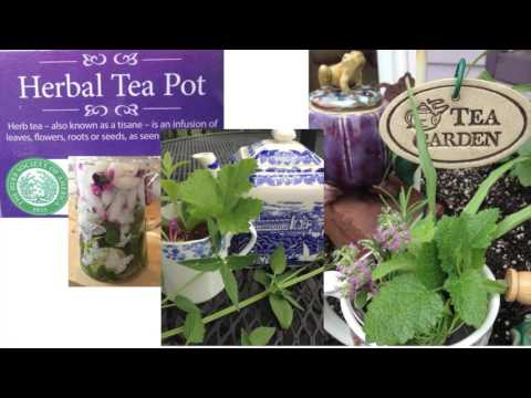 2015.08 All About Tea with Kathleen Gips w/disclaimer
