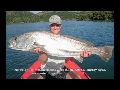 Kob Release - Salt Fishing South Africa Competion Entry