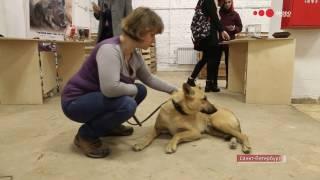 Друзей не покупают! В Санкт-Петербурге прошел фестиваль бездомных животных