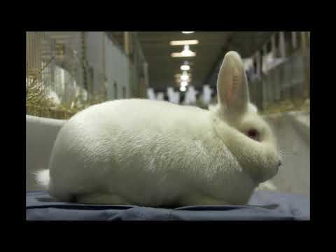 neem je een konijn in huis tips