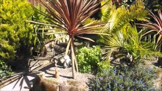 Tropical Gardening In The UK (Spring Update 22/04/2016)