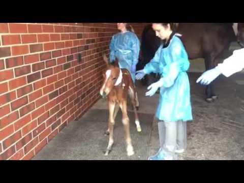 Rare Twin Foals
