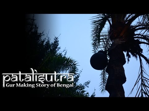 Patalisutra || Gur || Jaggery  Making Story of Bengal