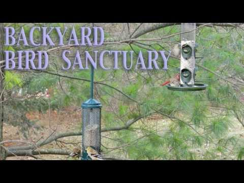 Backyard BIRD Sanctuary