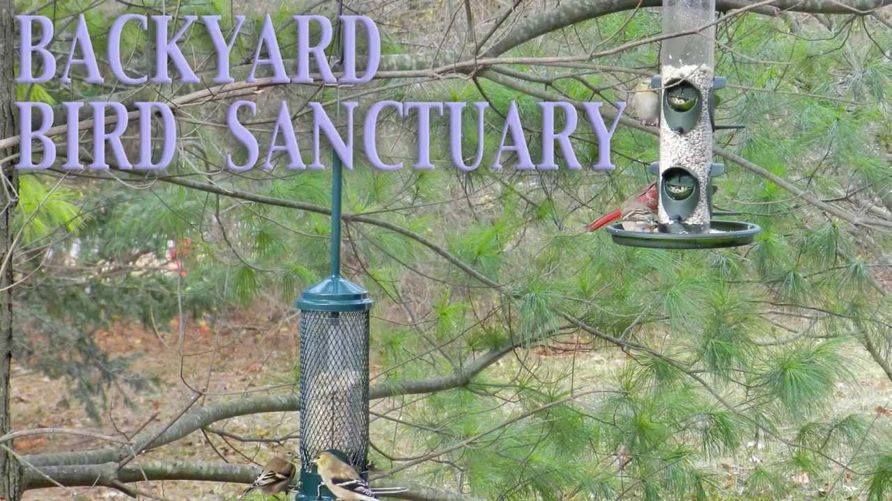 Genial Backyard BIRD Sanctuary