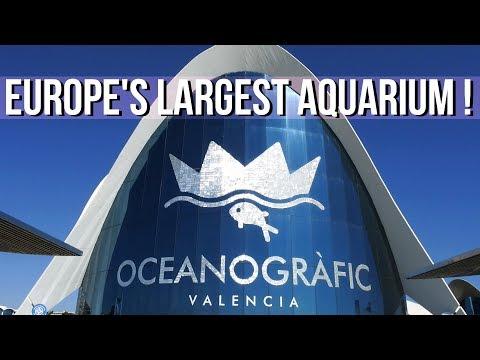 The Oceanografic Aquarium in Valencia, Spain | Grace Lee London