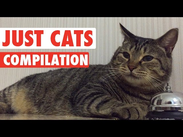 Just Cats Pet Video Compilation 2016