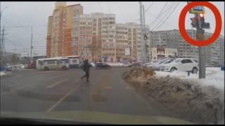 Собака оказалась сознательнее пешехода в Тюмени