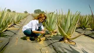 VERWAY: Europas größter Bio Aloe Vera Plantage   Simeon Wilhelm #Powerteam