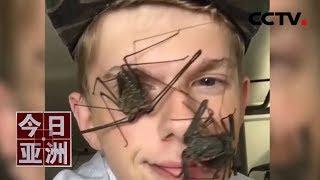 [今日亚洲]速览 奇葩!德国小伙沉迷养昆虫 巨虫爬脸赚足眼球| CCTV中文国际