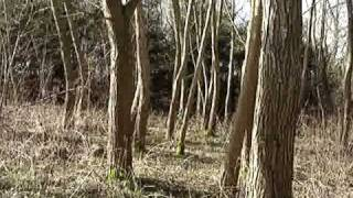 Walk through mixed woodland coppice