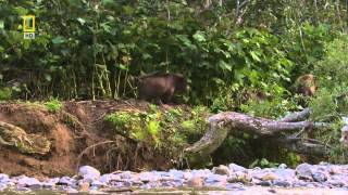 Дикая природа России - [2_6] Камчатка