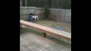 Dog Won't Stop Playing