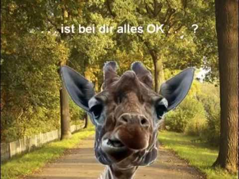 Lustige Giraffe Youtube