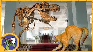 Макс и Маша едут в гости и в музей. Кошки и динозавры
