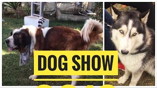 Dog show 2018 in Gujarat   Dog championship by INKC dog competition in Ahmedabad