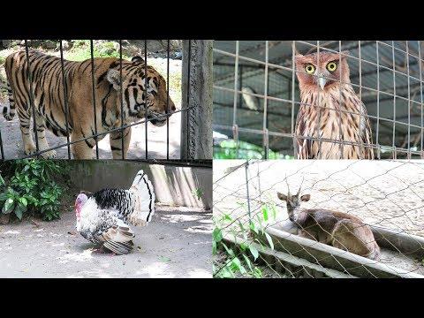 Philippines Wildlife Zoo/Farm in Zambales : Botolan-Iba