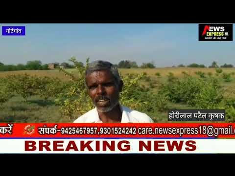 जैविक पद्धति से अमरूद की खेती कर किसान हो रहे समृद्ध