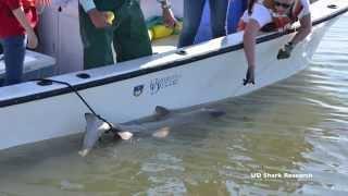 Sea Talk- Dogfish Sharks