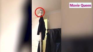 猫 犬 かわいい おもしろい 爆笑vol.1【funny cats and dogs videos】 thumbnail