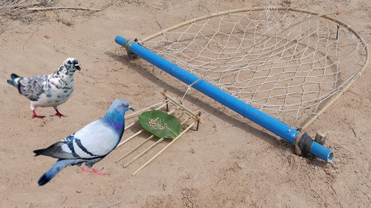 DIY Deep Fall Pigeon Bird Trap Using Net That Work 100% By Men