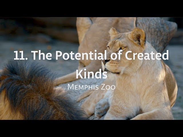 Exploring IGH: 11. The Potential of Created Kinds