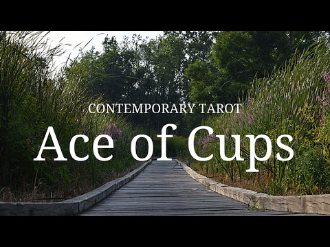Ace of Cups: Description in 3 Minutes
