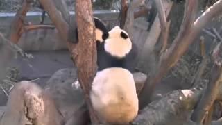 2013-12-26 Wu & Bai Yun: Time- Sharing the Hammock