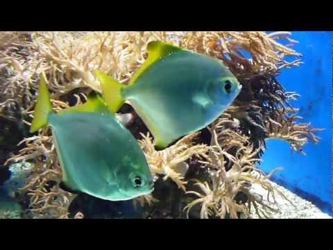 Japanische kaneko tamasaba goldfische im winter quartier for Aquarium fische im teich