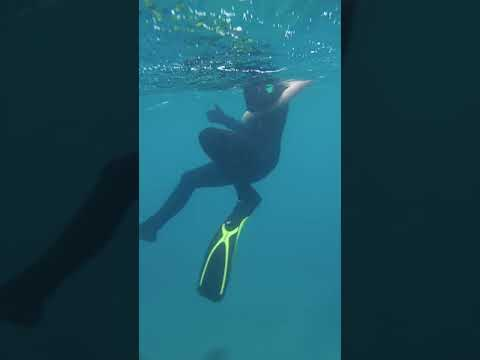 Snorkeling With Jellyfish At The Great Barrier Reef
