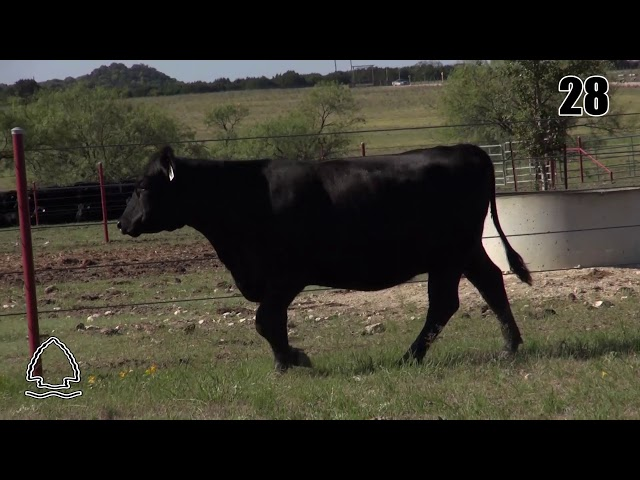 Pearcy Angus Ranch Lot 28