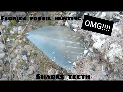 Fossil Hunting Florida April 7th 2019 Heartbreaker Kind Of Day Foul Language Warning On This Video