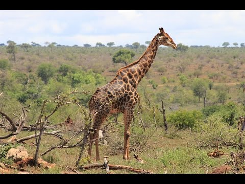 Family road trip - Kruger Park (South Africa) and Mlilwane Wildlife Sanctuary (Swaziland)
