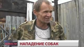 Новости.Нападение собак(, 2012-09-06T09:37:31.000Z)