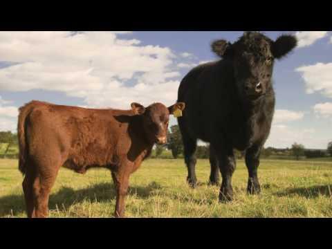 Livestock Checklist Guide