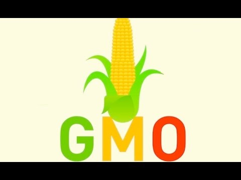 WHAT IS GMO