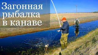 Загонная рыбалка на паук Рыбалка на подъемник Рыбалка 2019 Приколы на рыбалке 2019 Караси в канаве