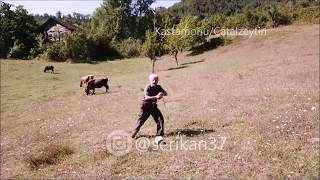 Drone gören masum amca SESLi çekim anı. Shepherd sees drone for first time,tries to attack@serikan37