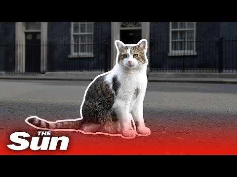 Larry the Downing Street cat's best moments